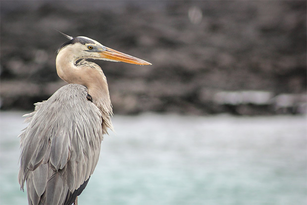 Cheap Cruises to the Galapagos Islands December 2019