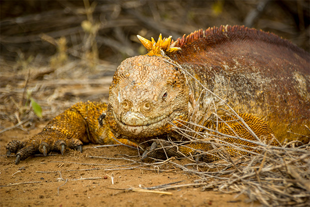 Cruises to the Galapagos Islands for 2 people December 2019
