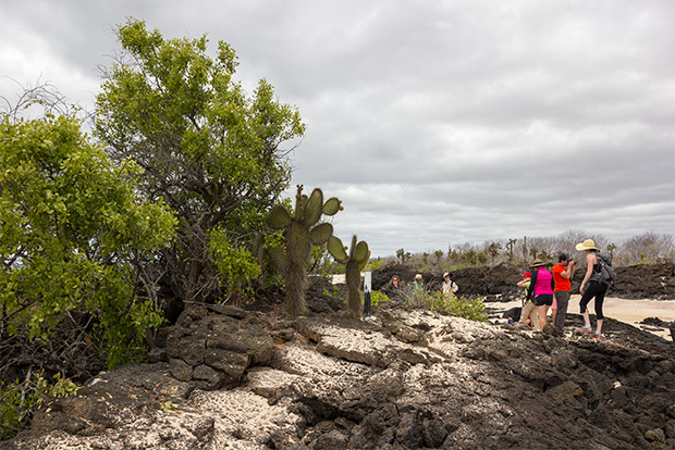 Cruises to the Galapagos Islands for 9 people December 2019