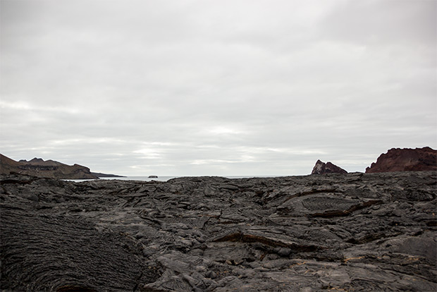 Last Minute Offers to Galapagos Islands December 2019