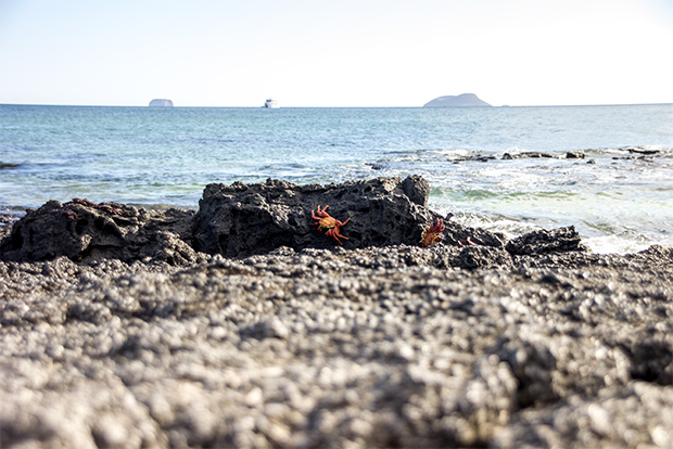Catamaranes a Islas Galápagos 2018