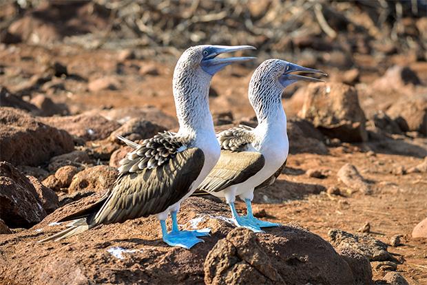 Cruceros a las Islas Galápagos para 14 personas septiembre 2020