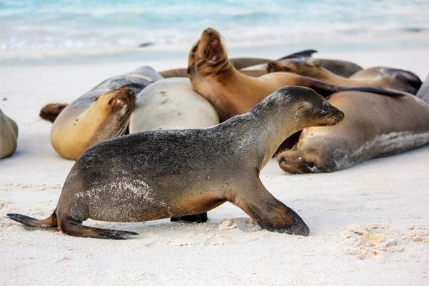 Cruceros a las Islas Galápagos para 16 personas octubre 2020