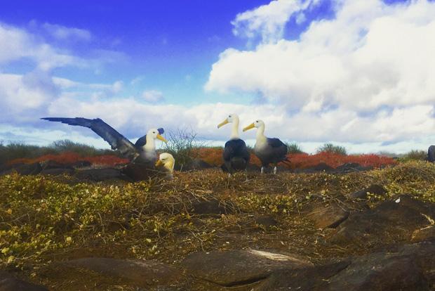 Cruceros a las Islas Galápagos para Fin de Año