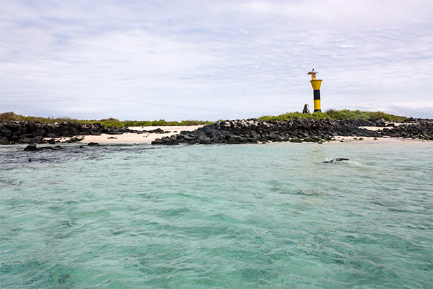 Cruises to the Galapagos Islands for 11 people February 2017