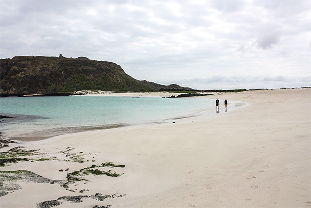 Cruises to the Galapagos Islands for 11 people January 2017