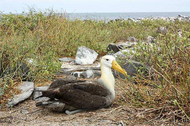 Cruises to the Galapagos Islands for 12 people January 2017