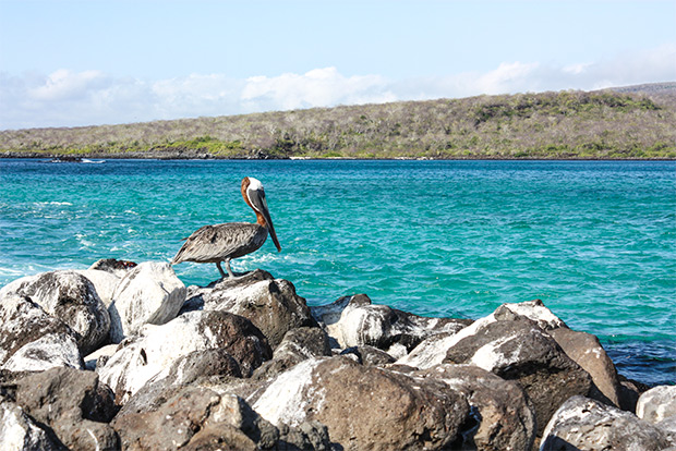 Cruises to the Galapagos Islands for 14 people January 2017