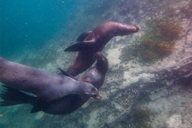 Cruises to the Galapagos Islands for 2 people February 2020