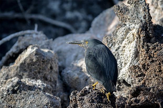 El mejor Crucero en las Islas Galápagos 2019