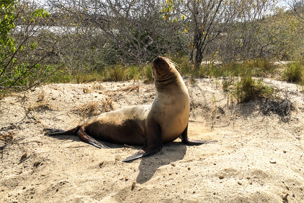 Family cruises to the Galapagos Islands February 2017