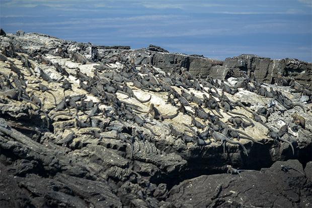 Gira de estudios a las Islas Galápagos agosto 2018