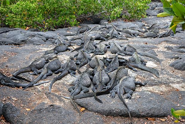 Gira de estudios a las Islas Galápagos septiembre 2018