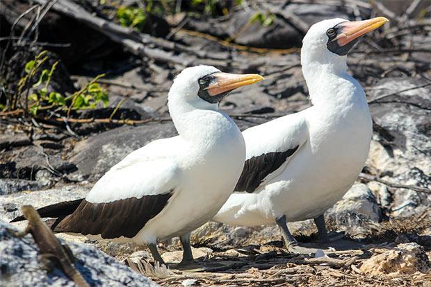 Paquetes Turísticos en oferta a las Islas Galápagos Semana Santa 2018