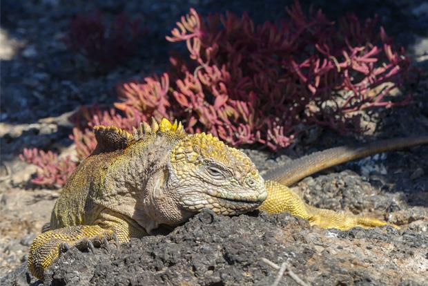 Paquetes Turísticos exclusivos a las Islas Galápagos Pascua 2018