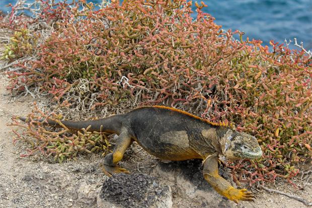 Vacaciones a las Islas Galápagos marzo 2018