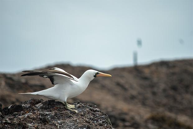 Cruceros a las Islas Galápagos para 10 personas agosto 2018