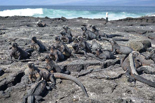 Cruceros a las Islas Galápagos para 11 personas diciembre 2017