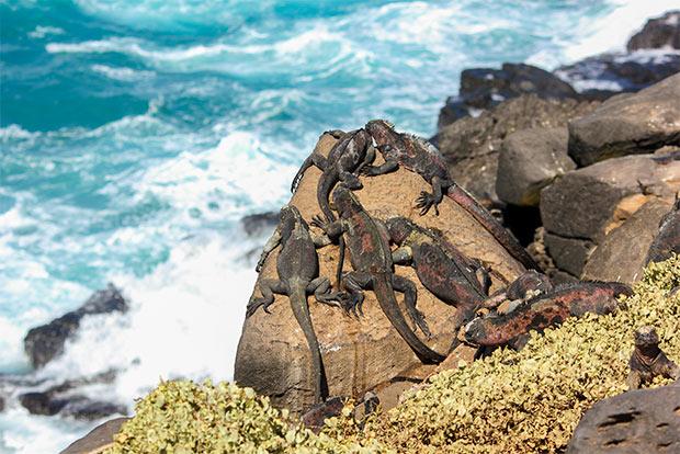 Cruceros a las Islas Galápagos para 2 personas enero 2018