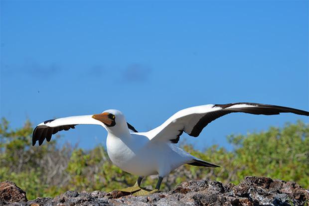 Cruceros a las Islas Galápagos para el próximo año