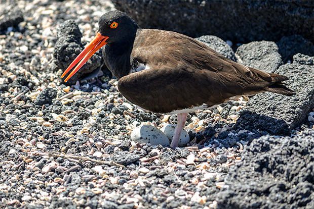 Cruises to the Galapagos Islands 2017