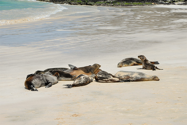 Cruises to the Galapagos Islands for 10 people March 2017
