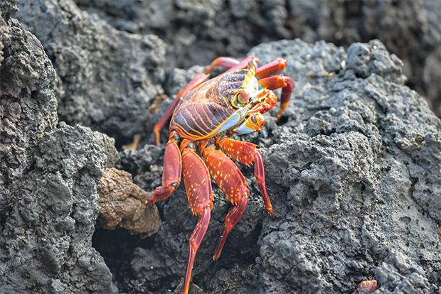Cruises to the Galapagos Islands for 11 people 2017