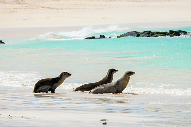 Cruises to the Galapagos Islands for 12 people March 2017