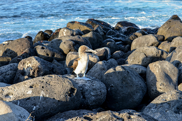 Cruises to the Galapagos Islands for 14 people March 2017
