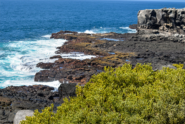 Cruises to the Galapagos Islands for 16 people April 2017