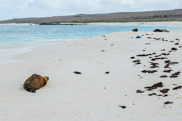 Cruises to the Galapagos Islands for 4 people April 2017