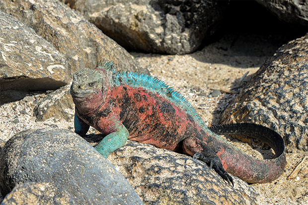 Cruises to the Galapagos Islands for 5 people April 2017