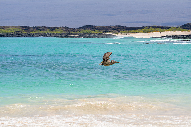 Cruises to the Galapagos Islands for 7 people 2017