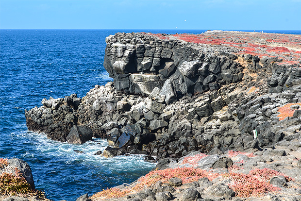 Cruises to the Galapagos Islands for 8 people 2017