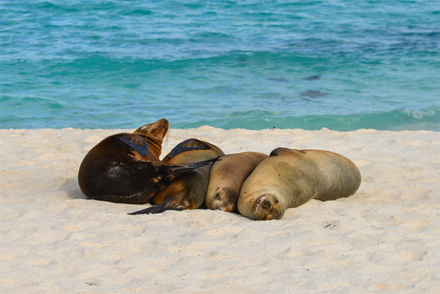 Cruises to the Galapagos Islands for 8 people March 2017