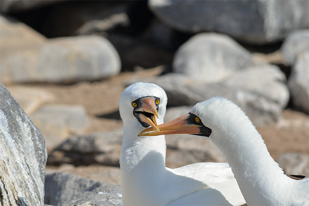 Cruises to the Galapagos Islands for Retirees 2017