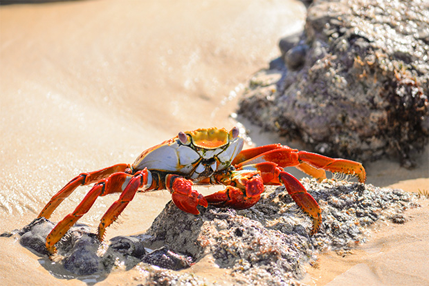 Cruises to the Galapagos Islands for University Students 2017