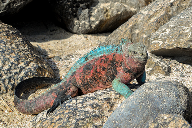 Cruises to the Galapagos Islands for the LGBT community 2017