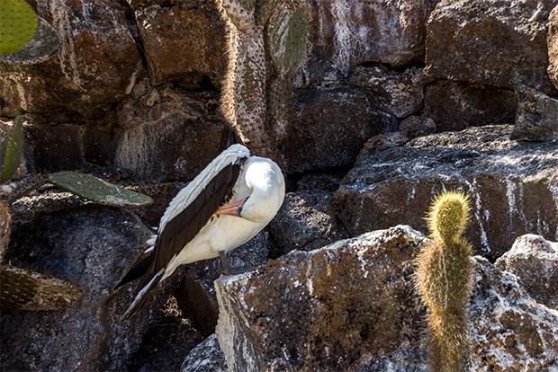 Gira de estudios a las Islas Galápagos enero 2018