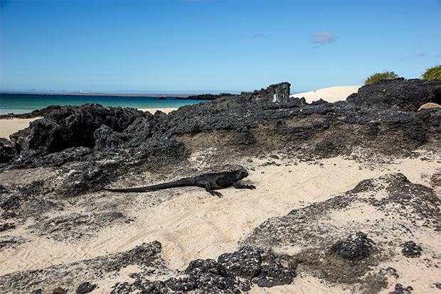 Oferta Cruceros a las Islas Galápagos septiembre 2020