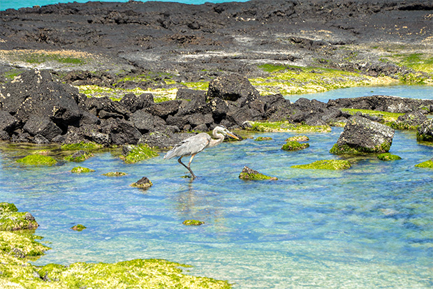 Romantic Catamarans to the Galapagos Islands March 2017