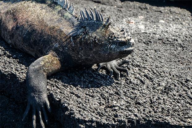 Turismo a las Islas Galápagos octubre 2018