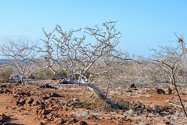 Viajes en oferta a las Islas Galápagos Pascua 2018