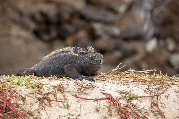 Cruises to the Galapagos Islands for Businessmen