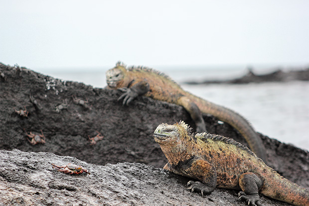 Cruises to the Galapagos Islands with Friends