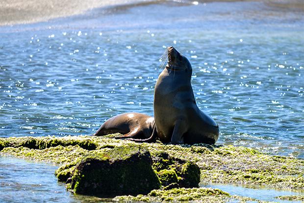 Gira de estudios a las Islas Galápagos junio 2018