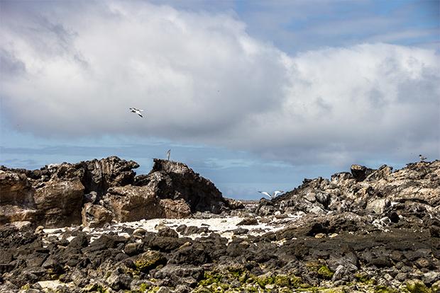 Offer Economy Cruises to Galapagos