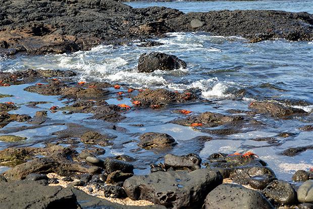 Paquetes Turísticos recomendados a las Islas Galápagos Semana Santa 2018