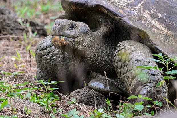 Turismo a las Islas Galápagos día de los enamorados