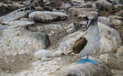 Cruceros a las Islas Galápagos día de los enamorados